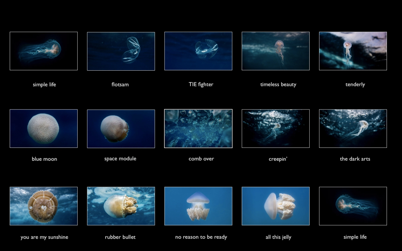 jellyfish portfolio