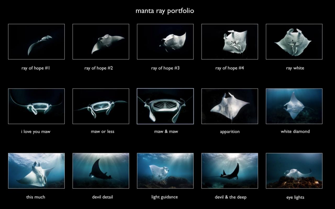 manta portfolio